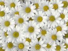 kvety výstava